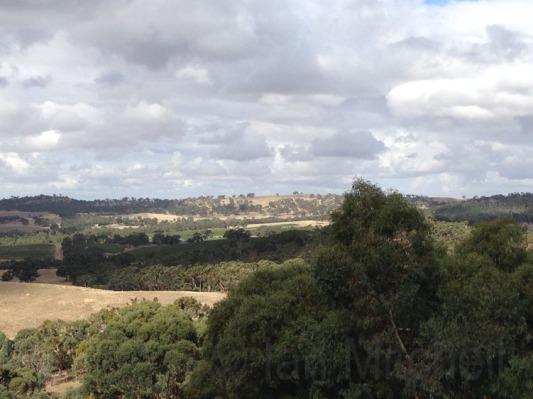 Views from verandah at Paullett Wines